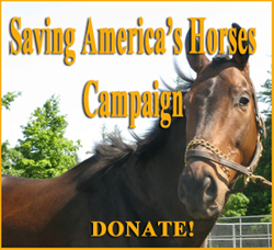 Donate to Save America's Horses
