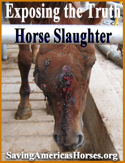 Exposing the Truth about Horse Slaughter